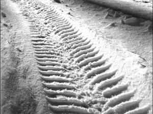 Snow Tyre Tracks